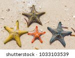 Yellow Knobbed Starfish