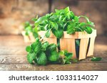 mint. bunch of fresh green... | Shutterstock . vector #1033114027