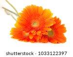 close up of  beautiful orange... | Shutterstock . vector #1033122397