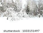 Winter Forest. Dense Forest In...