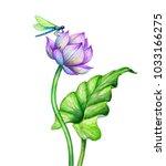 Watercolor Botanical...