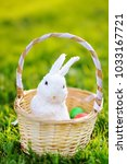 colorful easter eggs in a... | Shutterstock . vector #1033167721