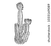wild cactus. hand drawn prickly ... | Shutterstock .eps vector #1033169089
