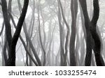 the morning mist is in the pine ... | Shutterstock . vector #1033255474