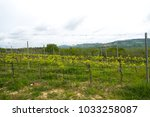 tuscan vineyard farm with... | Shutterstock . vector #1033258087
