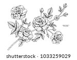 rose flower drawing ... | Shutterstock .eps vector #1033259029