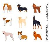 cartoon breed of dogs... | Shutterstock .eps vector #1033268449
