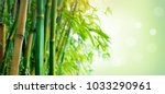 bamboo. bamboos forest. growing ... | Shutterstock . vector #1033290961