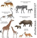 collection of animals with cubs ... | Shutterstock .eps vector #1033302127