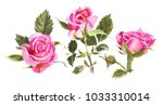 red watercolor  roses  isolated ... | Shutterstock . vector #1033310014