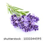 lavender flowers in closeup | Shutterstock . vector #1033344595