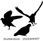 illustration with pigeon...   Shutterstock .eps vector #1033349497