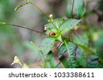 Lonely Ladybird Seeking Shelter.