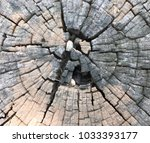 the core of the tree | Shutterstock . vector #1033393177