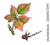 blackberry leaves in a... | Shutterstock . vector #1033417294