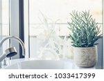 house plant succulent  senecio... | Shutterstock . vector #1033417399