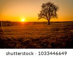 sunset in autumn with tree | Shutterstock . vector #1033446649