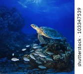 Red sea diving big sea turtle swimming over coral reef full of fish - stock photo