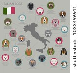dogs by country of origin.... | Shutterstock .eps vector #1033499641