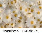 background of white flowers | Shutterstock . vector #1033504621