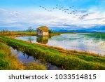 landscape of rice fields | Shutterstock . vector #1033514815