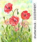 red watercolor poppies ... | Shutterstock . vector #1033549897