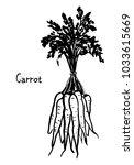 bunch of carrots vector... | Shutterstock .eps vector #1033615669