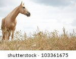 Horse Outdoors Standing In The...