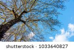 a branch of a big tree on a... | Shutterstock . vector #1033640827