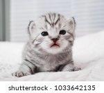 Stock photo lovely kitten portrait cute kitty baby striped kitten newborn kitten 1033642135