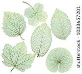 set leaves of green on white....   Shutterstock .eps vector #1033657201