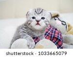 Stock photo cute kitten with a toy plush tabby kitten the kitten plays 1033665079