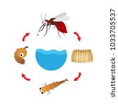illustration life cycle... | Shutterstock .eps vector #1033705537