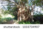 grande terre  guadeloupe french ... | Shutterstock . vector #1033734907