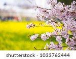 selective focus shot of cherry... | Shutterstock . vector #1033762444