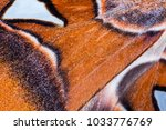 detailed macro photo of a wing... | Shutterstock . vector #1033776769