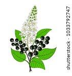 a bouquet of bird cherry branch ... | Shutterstock .eps vector #1033792747