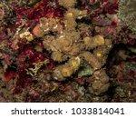 decorate crab. it decorate... | Shutterstock . vector #1033814041