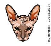 domestic cat s face. sphynx...   Shutterstock .eps vector #1033818379