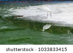 white heron in a city park on a ...   Shutterstock . vector #1033833415