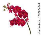 Red Orchid Flowers ...