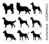 dog breeds silhouettes set.... | Shutterstock .eps vector #1033894411