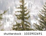 conifer tree with pinecones  | Shutterstock . vector #1033902691