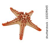 Red Knobbed Starfish Isolated...