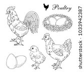 poultry farm. rooster  hen ... | Shutterstock .eps vector #1033942387