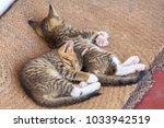 two cute small kitten sleeping... | Shutterstock . vector #1033942519