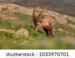 ibex  range of mont blanc.... | Shutterstock . vector #1033970701