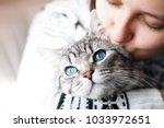 Stock photo woman at home kissing her lovely fluffy cat gray tabby cute kitten with blue eyes pets and 1033972651