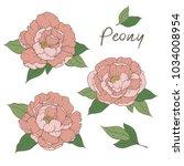 beautiful peony flowers. vector ... | Shutterstock .eps vector #1034008954