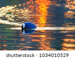 spring bird on the evening lake | Shutterstock . vector #1034010529
